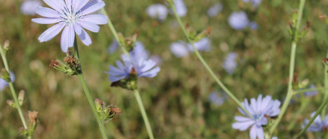 Bea Sanjust - Wildflowers